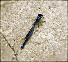 Blue Dragonfly by Livsicles