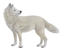 White Wolf by Xilacs