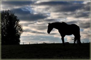 lonely horse by brijome