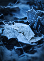 Frozen by Rustmouth