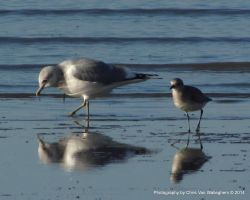 The One About the Gull and the Plover by vanwaglajam
