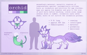 orchid [REF SHEET] by R-WOLFE