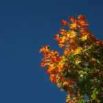 the Season of Colors I by Photopathica