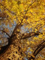 Fall Foliage by ThePeculiarMissE