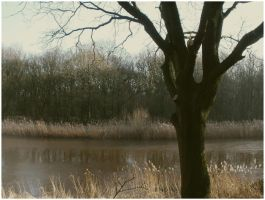 The old tree by goudlokje