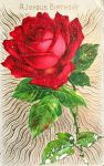 Rose Rouge de Joie by Yesterdays-Paper