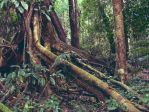 Australian rainforest by postaldude66