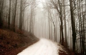 Forest Path by TearsStock