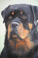 Rottie in water colours by suesuzanne