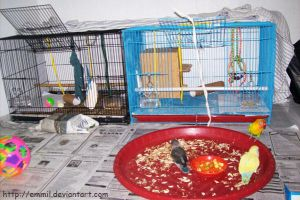 Moving to battery cage by emmil