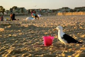 Seagull by Justateen10