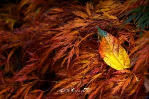 All the Colors of Fall 2 by UrbanRural-Photo