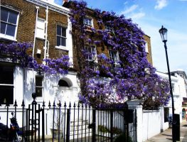 Notting Hill Gate Flower Wall by AlexSatriani