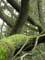 Mossy tree by tamaraR-stock