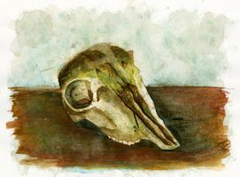Deer skull study by Mischievous-Moonie