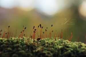 The Tiny World by byNici