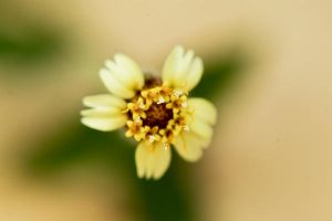 pollen of a little flower by ReisLie