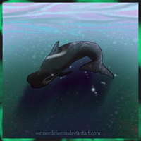 Pilot Whale by WeisseEdelweiss