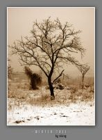 WINTER TREE by viKING by vikingexposure