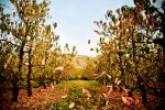 Autumn orchard by PeterTreePhotography