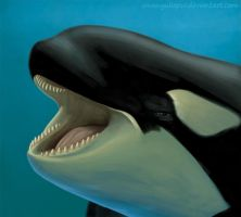 Orca under water by YuliaPW