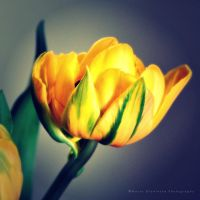 Yellow dreams by Rontarija