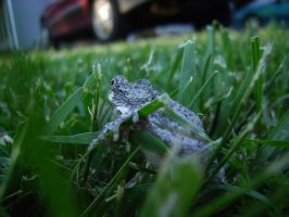 Tree Frog 12 of 24 by celticmaiden7