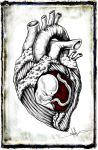 Fetal Heart by ShawnCoss