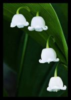 Lily of the Valley by VeLisLaVaa