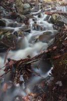Forest Flood by Impure-Soul-2