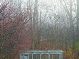Mist and Spice by LAPoetry-n-Photo