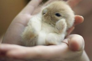 Hand Held Bunny by EmperorOfTheDamned