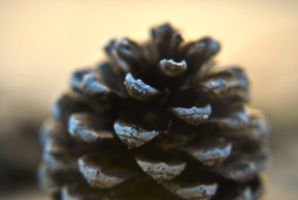 pine cone by LacunaRes