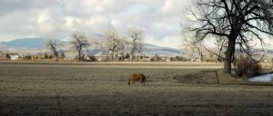 Pastoral Scene by PamplemousseCeil