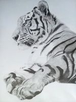 Amur Tiger by Norafe