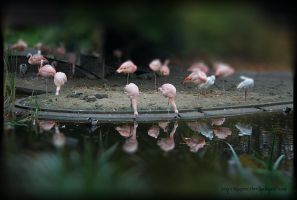 Tilted Flamingos by SeaWhisper