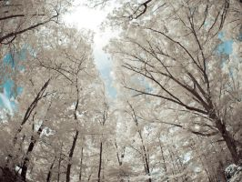 Nature Walk Infrared by blackismyheart90