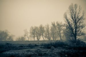 Trees and mist by saltov-man