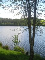 Lake and the Trees by jacko56