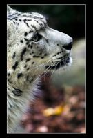 The Snow Panther III by sekhmet-neseret