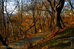 Evening road through the forest by csifer