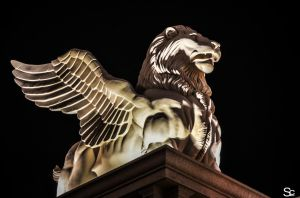 Griffin in Vegas by ShannonCPhotography