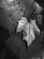 dry leaf by Imp-into-iconograph