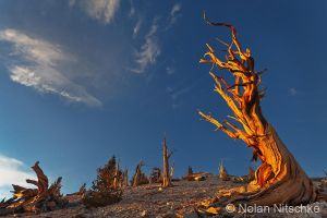 Bristlecone First Light by narmansk8