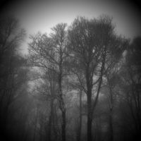 misty forest morning by RickHaigh
