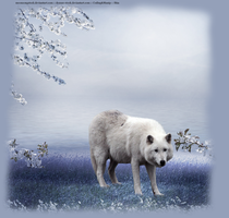 White Wolf by shiasgraphics