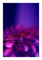 desperately in love by werol