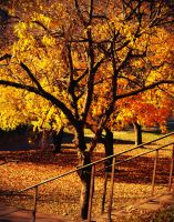 Fall Into Me v2 by TheOn3LeftBehind