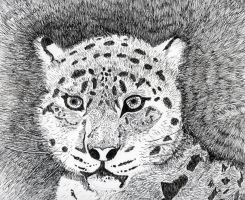 Snow Leopard by Solutionist