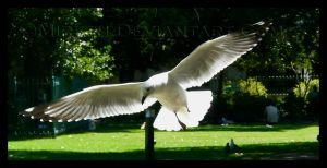 White Wings by Mireth